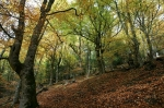 Arboles milenarios del bosque de Rioscuro